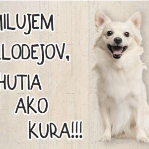 Čivava biela. Pozor pes tabuľka. Milujem zlodejov, chutia ako kura!!!