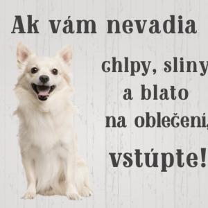 Čivava biela. Pozor pes tabuľka. Ak vám nevadia chlpy, sliny a blato na oblečení vstúpte!