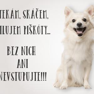 Čivava biela. Pozor pes tabuľka. Štekám, skáčem, milujem piškóty... Bez nich ani nevstupujte!!!